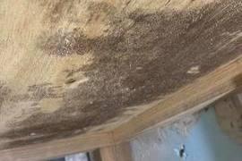 熊本施設 除カビ工事 20部屋(内壁・床下)の施工前画像