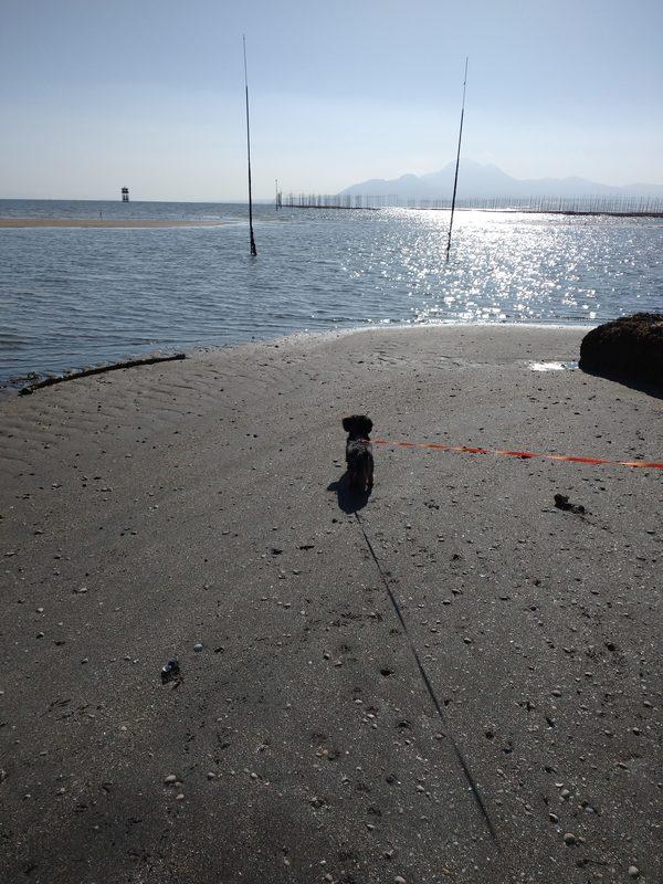 看板犬ラテ初めての海へ