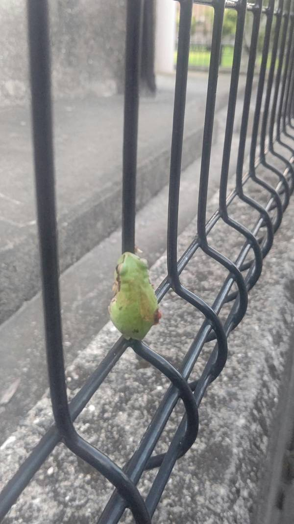 こんなに暑いのにカエル君大丈夫かなぁ~^^塗装最終引き渡し時に発見@@