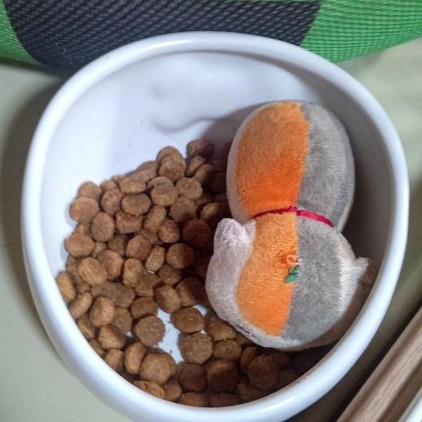 大事なアイテムは食事する器に隠すのねwにゃんこ先生でした♪(犬の遊びアイテム)